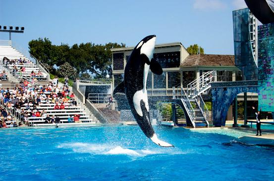 SeaWorld San Diego Shamu Jumping