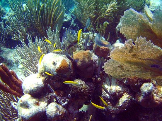 Snorkeling British Virgin Islands - Virgin Gorda