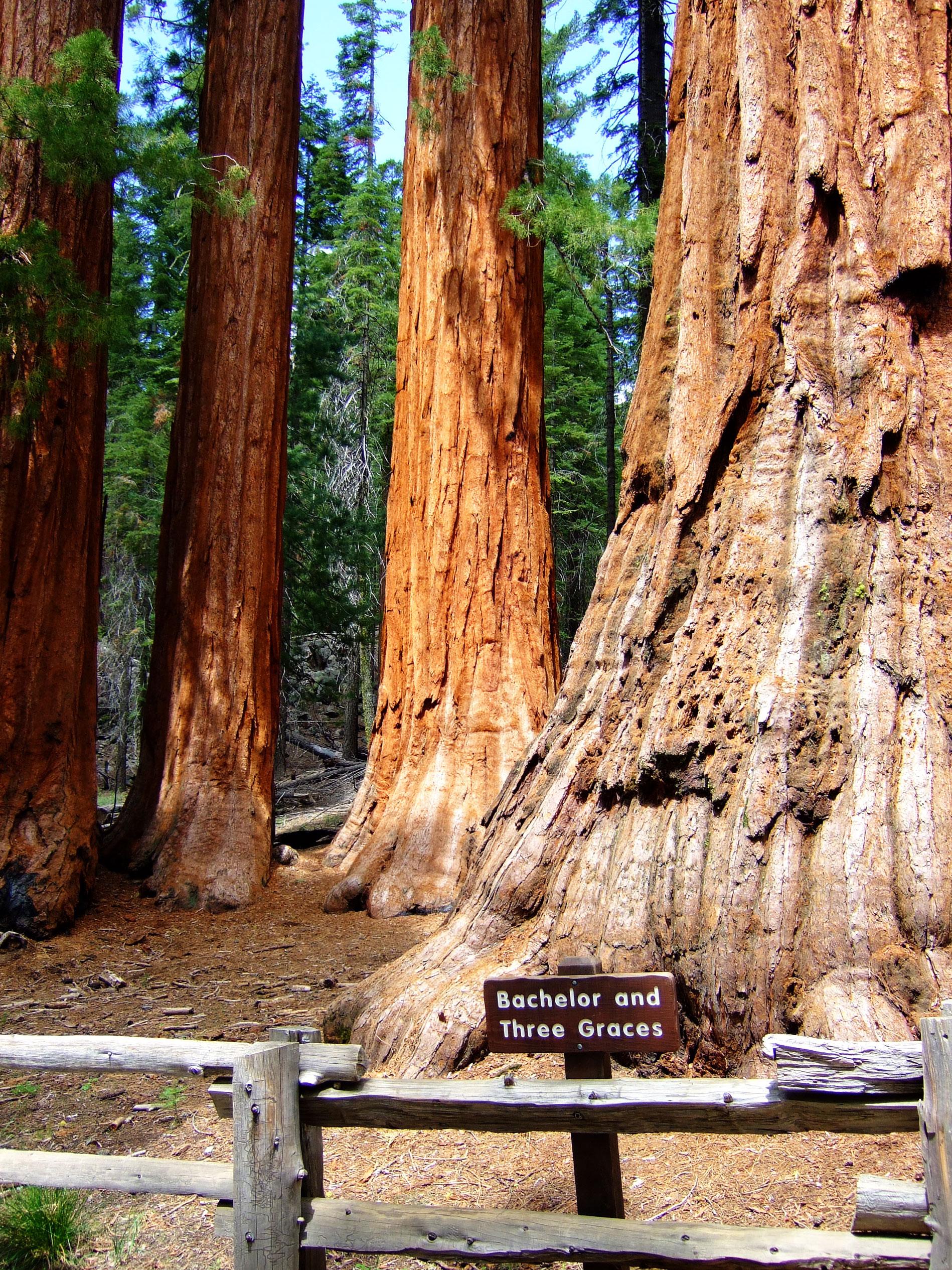 Yosemite Vacation 10 Fun Things To Do
